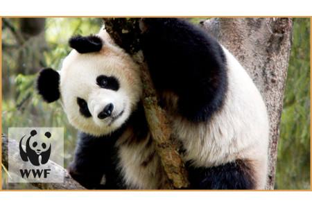 Мы стали сторонниками WWF
